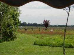 Eerste extra afbeelding van Kamperen Landschapscamping Het Veentieshof in Mantinge