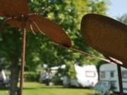 Voorbeeld afbeelding van Kamperen Camping Noordlaren in Noordlaren