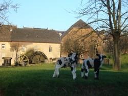 Vergrote afbeelding van Bungalow, vakantiehuis Vakantiewoningen De Schapenweide  in Wijlre