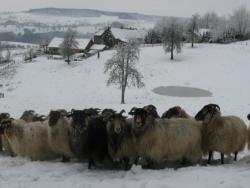 Derde extra afbeelding van Groepsaccommodatie Paradijsvogels Hoeve ten Bosch in Vijlen