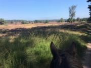 Voorbeeld afbeelding van Ponykamp, ruiterkamp Manege De Spreng in Laag-Soeren