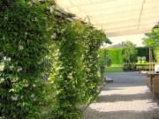 Voorbeeld afbeelding van Bungalow, vakantiehuis Durpshuuske in Merkelbeek