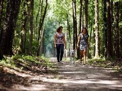Vergrote afbeelding van Bungalow, vakantiehuis RCN Vakantiepark de Jagerstee in Epe