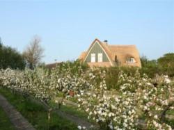 Vergrote afbeelding van Bed and Breakfast Heerlyckheid van Texel in De Koog (Texel)
