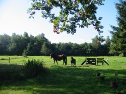 Derde extra afbeelding van Bungalow, vakantiehuis Vakantiewoningen 't Stokpaardje en Arnica  in Haulerwijk