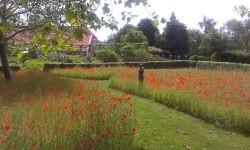 Vergrote afbeelding van Bungalow, vakantiehuis De Oude Graanzolder in Vriescheloo