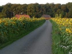 Vergrote afbeelding van Kamperen Kampeerboerderij De Baankreis in Almen
