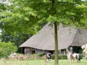 Voorbeeld afbeelding van Groepsaccommodatie De Vlaamse Schuur Landgoed De Hoevens in Alphen NB