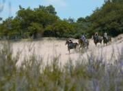 Voorbeeld afbeelding van Paardrijden, Manege, Huifkar Hippisch Centrum de Sprong in Sint Anthonis