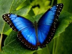 Vergrote afbeelding van Dierentuin Vlindertuin Vlindorado in Waarland