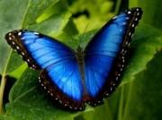 Voorbeeld afbeelding van Dierentuin Vlindertuin Vlindorado in Waarland