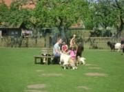 Voorbeeld afbeelding van Kinderboerderij, Boerderij bezoek Stadsboerderij De Vosheuvel in Amersfoort
