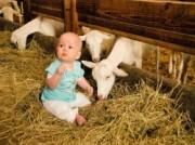 Voorbeeld afbeelding van  Boerderij bezoek,Kinderboerderij Boerderij 't Geertje  in Zoeterwoude