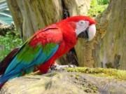 Voorbeeld afbeelding van Dierentuin Zoo Veldhoven in Veldhoven