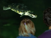 Voorbeeld afbeelding van Dierentuin Schildpadden Centrum in Alphen aan den Rijn