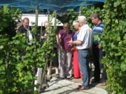 Voorbeeld afbeelding van Wijngaard, wijnproeverij Wijngaard Teunishof in Culemborg