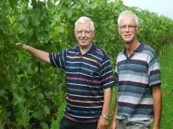 Vergrote afbeelding van Wijngaard, wijnproeverij Biologische Wijngaard de S-Akker in Dodewaard