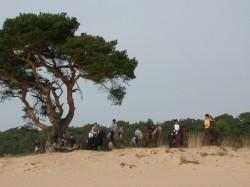 Vergrote afbeelding van Paardrijden, Manege, Huifkar Manege van Loon in Loon op Zand