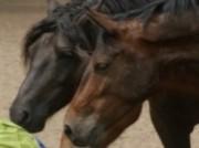 Voorbeeld afbeelding van Paardrijden, Manege, Huifkar Stal 't Reelaer in Raalte