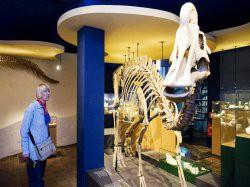 Vergrote afbeelding van Museum, Galerie, Tentoonstelling Natuurhistorisch Museum Maastricht in Maastricht