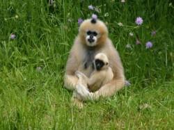 Vergrote afbeelding van Dierentuin Zoo Parc Overloon in Overloon