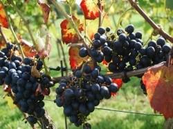 Vergrote afbeelding van Wijngaard, wijnproeverij Erve Wisselink Wijngaard in Eibergen