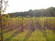 Voorbeeld afbeelding van Wijngaard, wijnproeverij Wijngaard El Placer  in Lelystad
