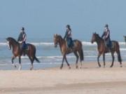 Voorbeeld afbeelding van Paardrijden, Manege, Huifkar Duinmanege van Poelenburgh in Schoorl