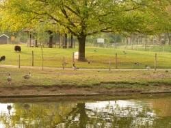 Vergrote afbeelding van  Boerderij bezoek,Kinderboerderij Kinderboerderij De Schouw in Zutphen