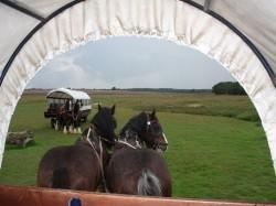 Eerste extra afbeelding van Paardrijden, Manege, Huifkar Stalhouderij Wouter Hazeleger in Otterlo