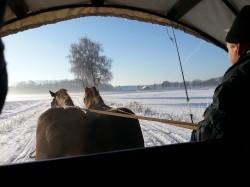 Tweede extra afbeelding van Paardrijden, Manege, Huifkar Stalhouderij Wouter Hazeleger in Otterlo