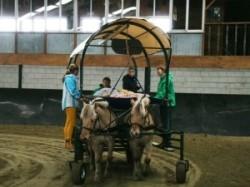 Vergrote afbeelding van Paardrijden, Manege, Huifkar Huifbedrijden De Bevelanden in Kamperland