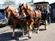 Voorbeeld afbeelding van Paardrijden, Manege, Huifkar Stal Vonk in Giessenburg