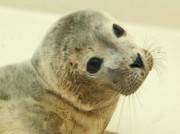Voorbeeld afbeelding van Dierentuin A Seal Zeehondenopvang in Stellendam