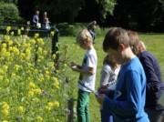 Voorbeeld afbeelding van Familiedag Natuur- en Milieucentrum Ossenbeemd in Deurne