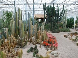 Vergrote afbeelding van Attractie, Pretpark Belevingspark CactusOase in Ruurlo