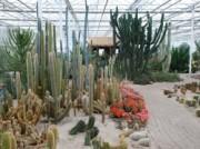Voorbeeld afbeelding van Attractie, Pretpark Belevingspark CactusOase in Ruurlo