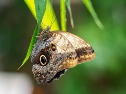 Vergrote afbeelding van Dierentuin Klein Costa Rica Tropische Vlindertuin in Someren