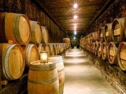 Vergrote afbeelding van Wijngaard, wijnproeverij Wijnmuseum Wijnhuis Robbers & van den Hoogen in Arnhem