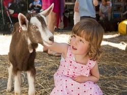 Vergrote afbeelding van Kinderboerderij, Boerderij bezoek Kinderboerderij Hagerhof in Venlo