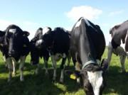 Voorbeeld afbeelding van Groepsactiviteiten Melk-Drive & Excursieboerderij in Genderen