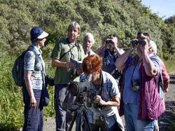 Vergrote afbeelding van Groepsactiviteiten Vogelsafari Calidris in De Cocksdorp (Texel)