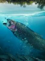 Eerste extra afbeelding van Vissen WILD bijzonder vissen in Reutum
