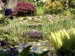 Vergrote afbeelding van Tuinen, Kunsttuinen Vijvertuin de Waterjuffer in Augustinusga